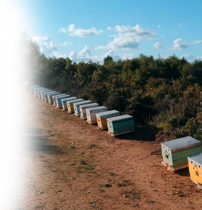αγνό μέλι παραγωγή