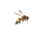 flying-bee-png-3