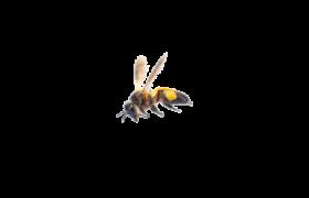 μέλισσα που πετά με γύρη
