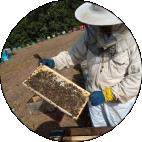 μελισσοκόμος Μέλι Παπαδοπούλου
