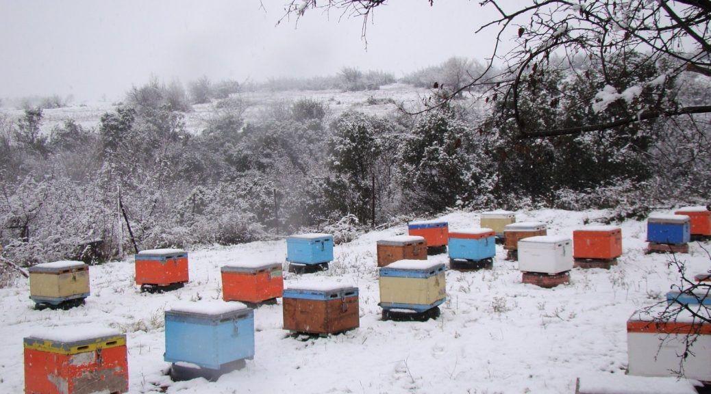 μέλισσες τον χειμώνα