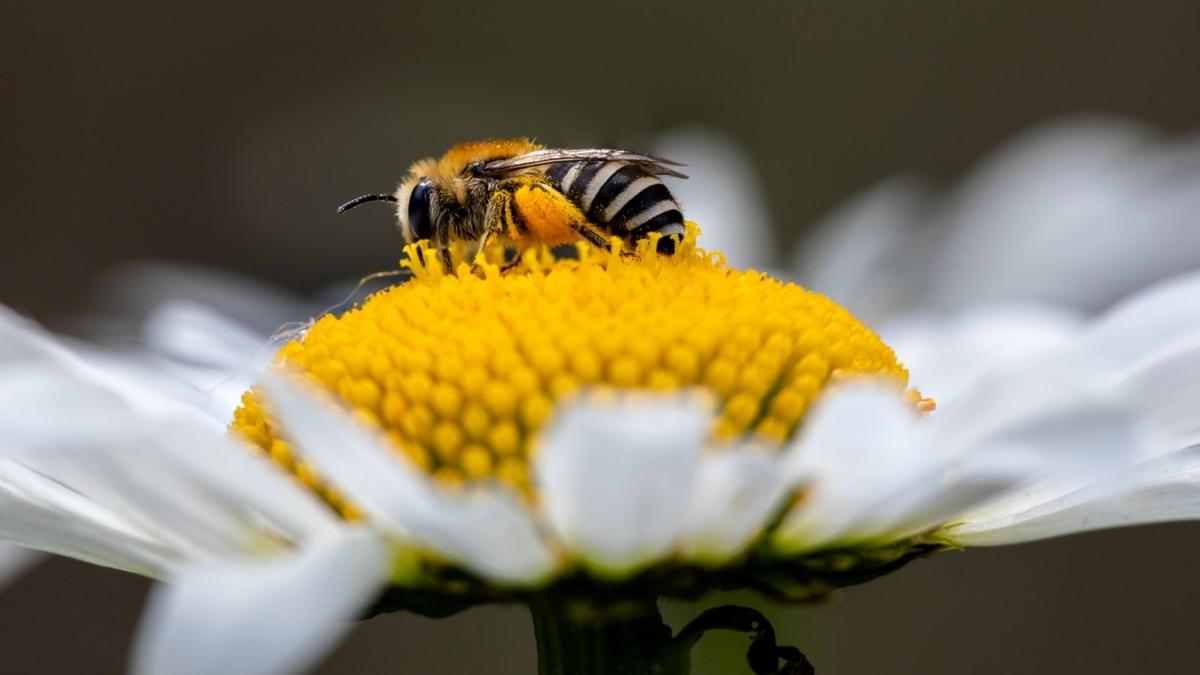 Ανόθευτο μέλι