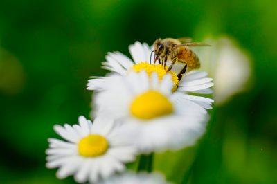 μέλισσα μέλι