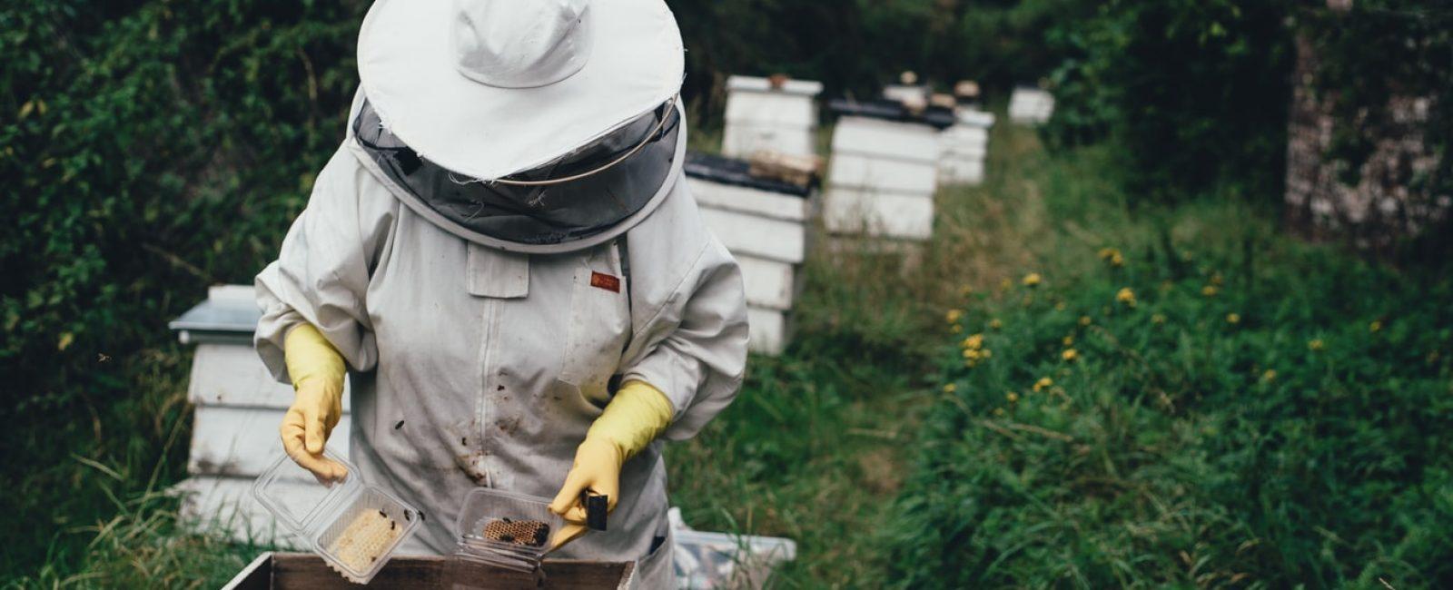 Μελισσοκόμος μαζεύει μέλι